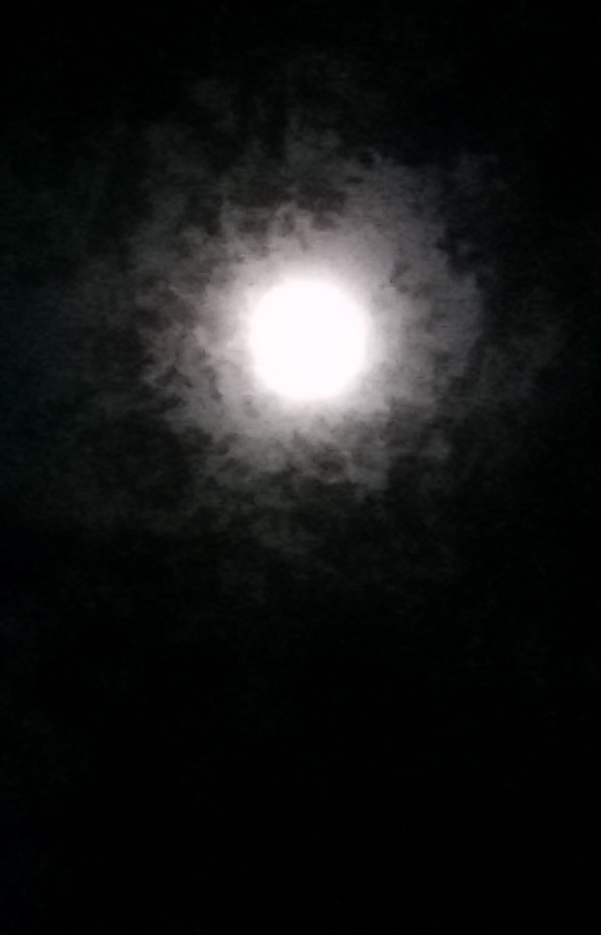 moon in back yard