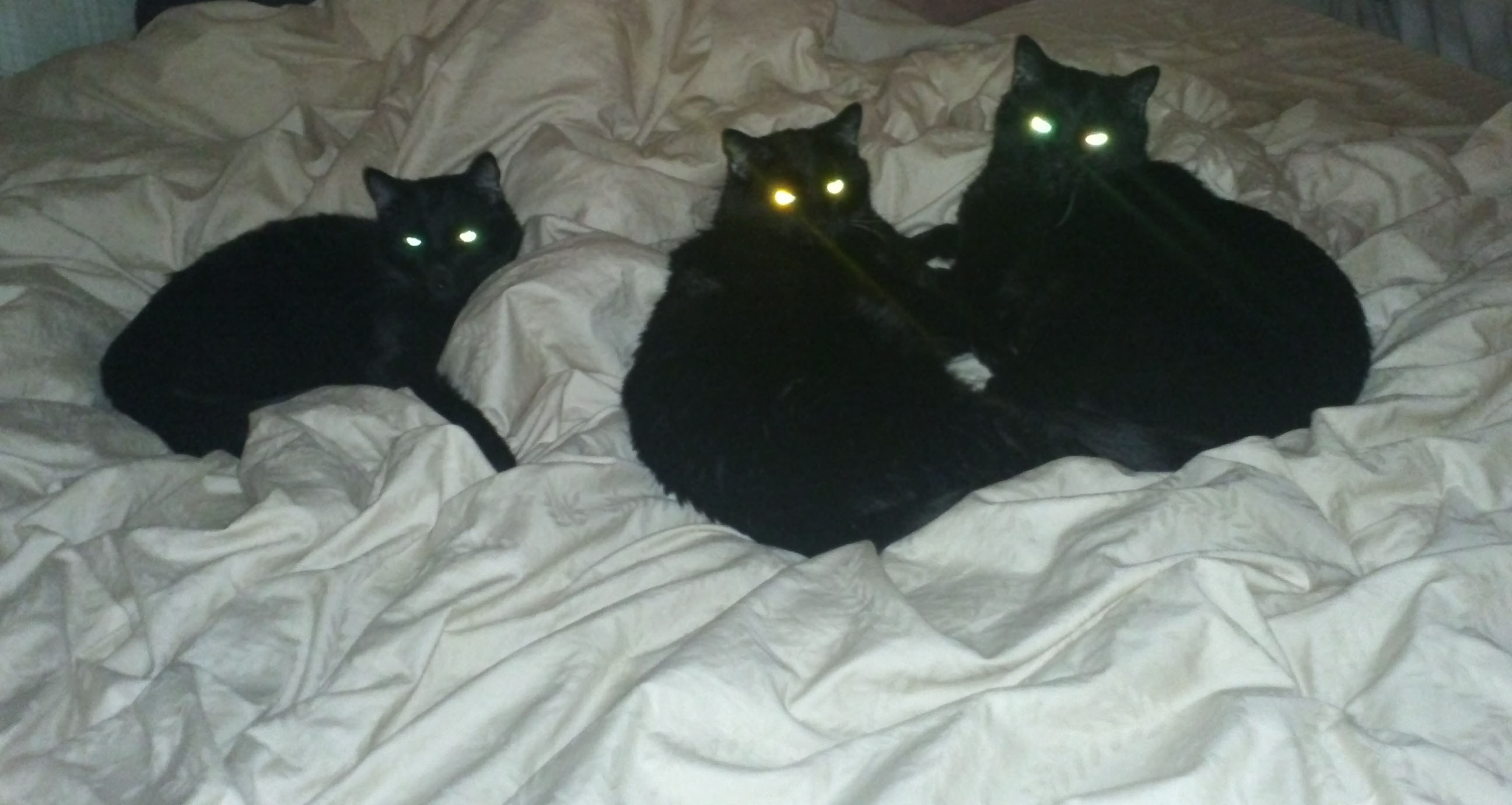 BLACK KITTIES THREE1