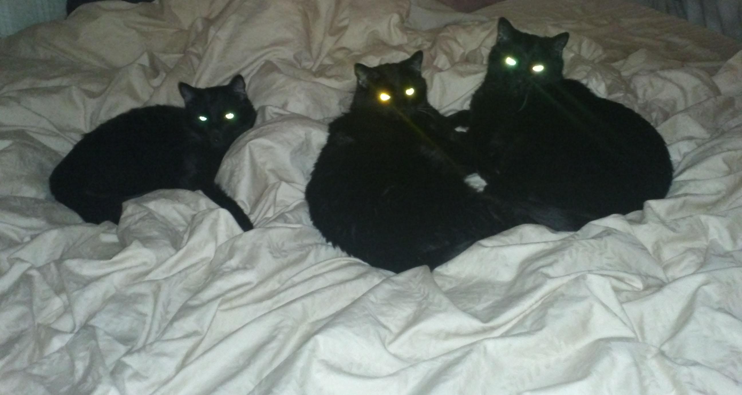 BLACK KITTIES THREE1