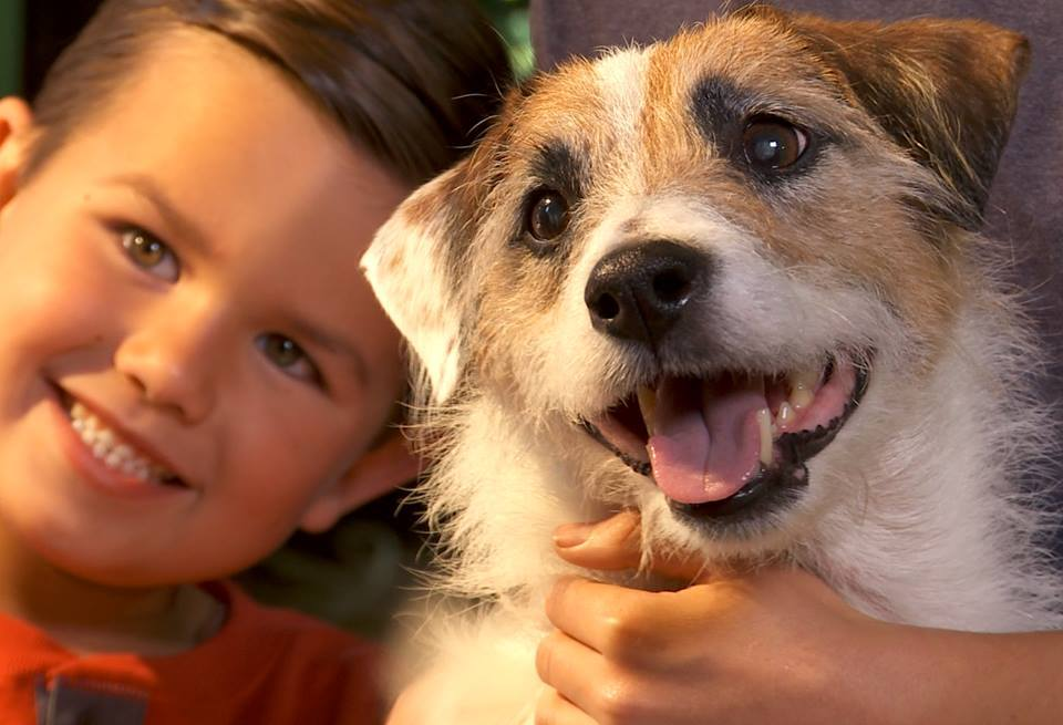 the 12 dogs of christmas 2005 trailer