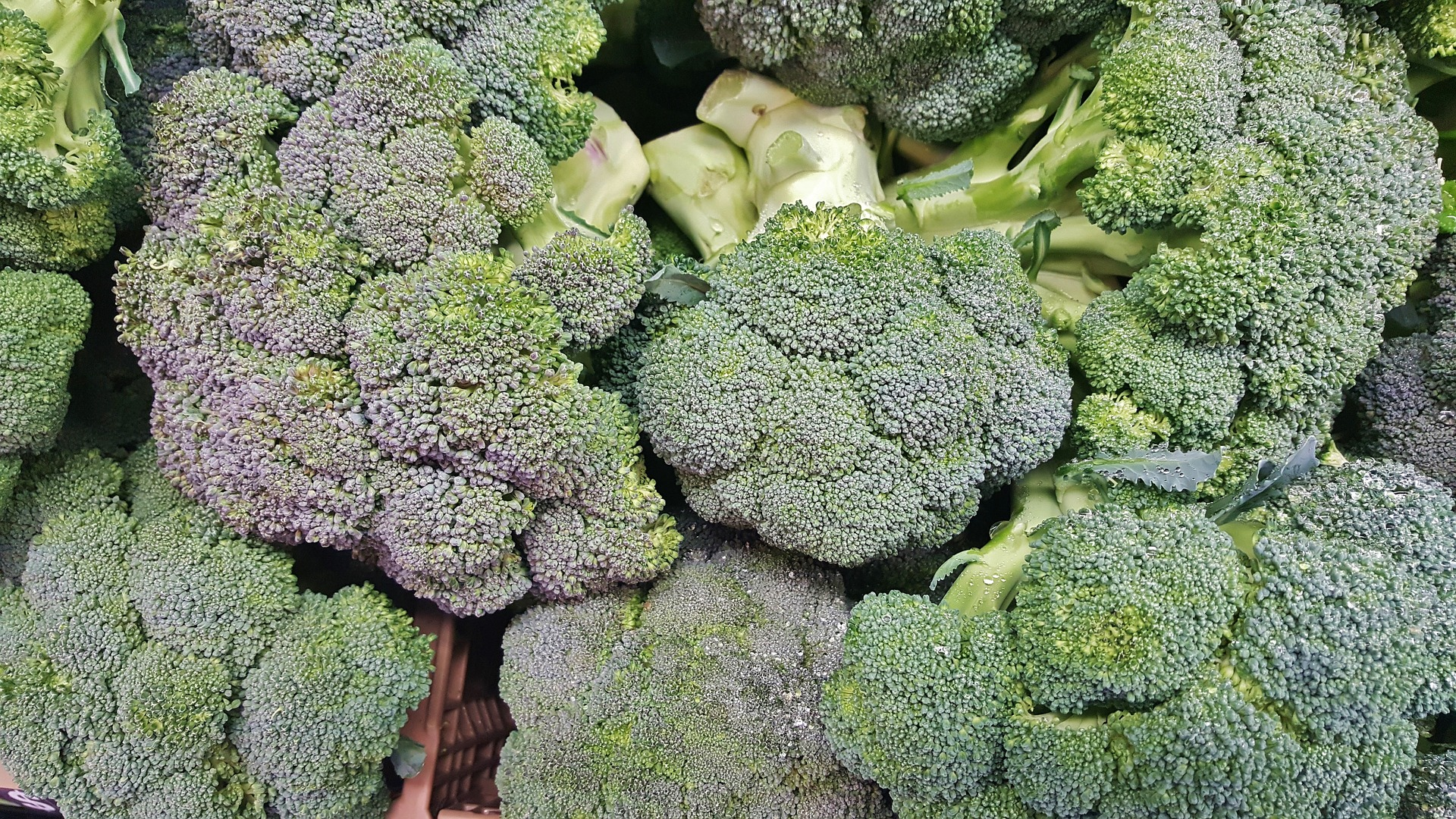 broccoli-healthy-veggies-colon+health-debadotell