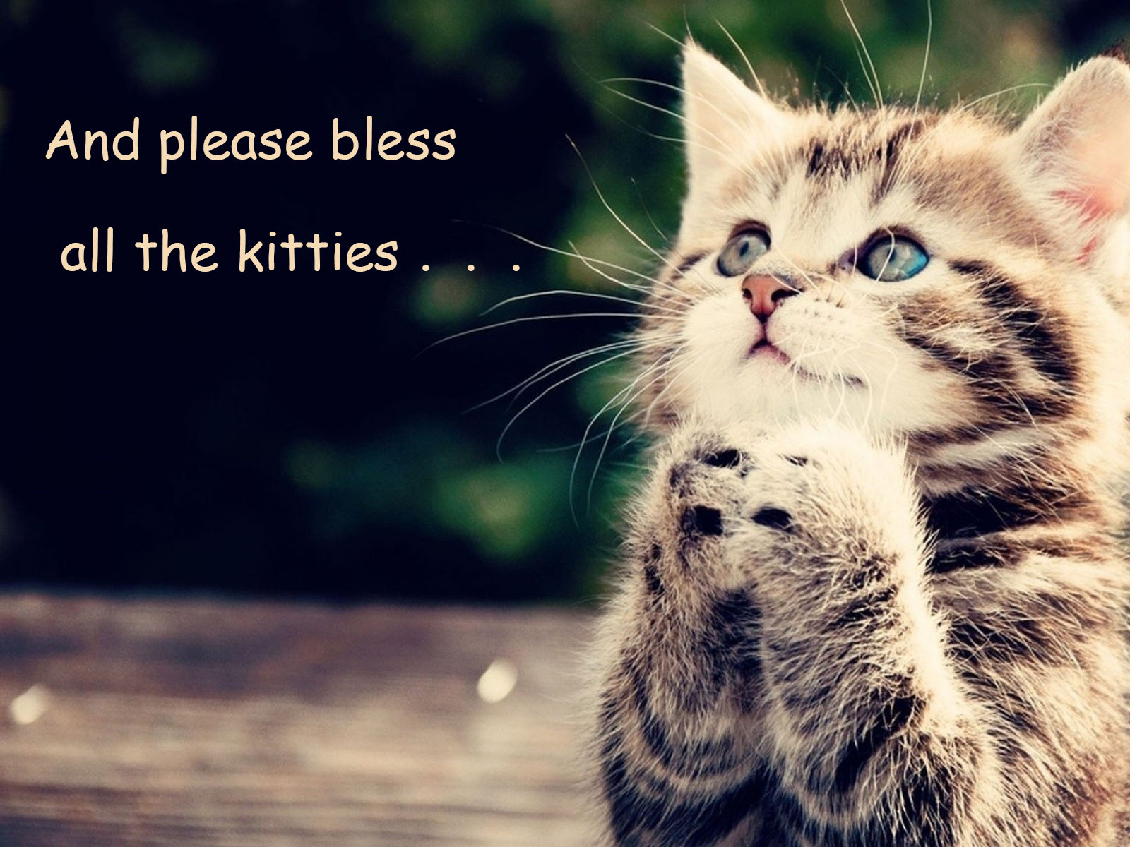 Kitty Praying for All the Kitties